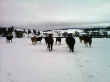 Charging horses