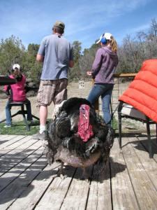 Tom the turkey stays behind