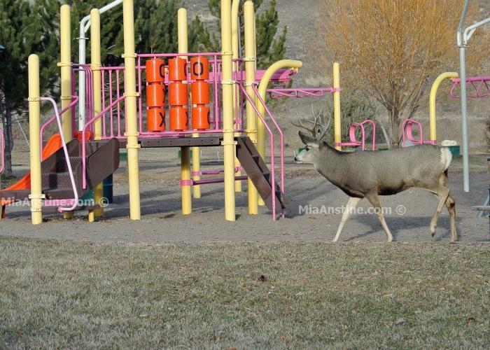 playgroundbuck