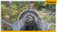 youth-colorado-merriam's-turkey-hunt