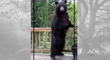 CPW-Bear-Aware-Feature-Mias-Motivations-4faa379c-3db8-439f-8818-ce55b38600fb