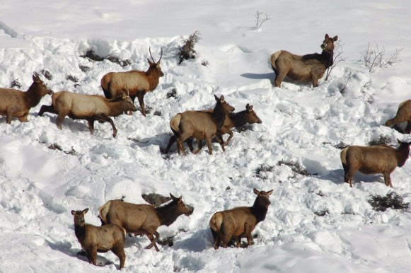 CPW-Elk-Hunt-Colorado-31d093de-9033-418e-8490-70c30517129c
