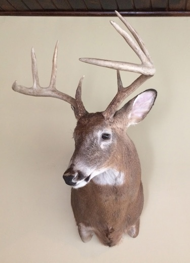 whitetail-dear-mount-josh-lantz-photo