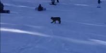 lynx-at-colorado-ski-resort