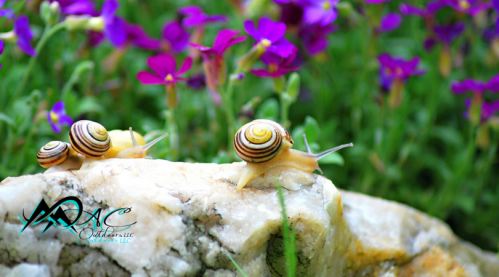 Snails-flower-bed-Nature-in-the-city-MAC WordPress Feature