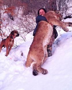 Wild-game-mountain-lion-predator